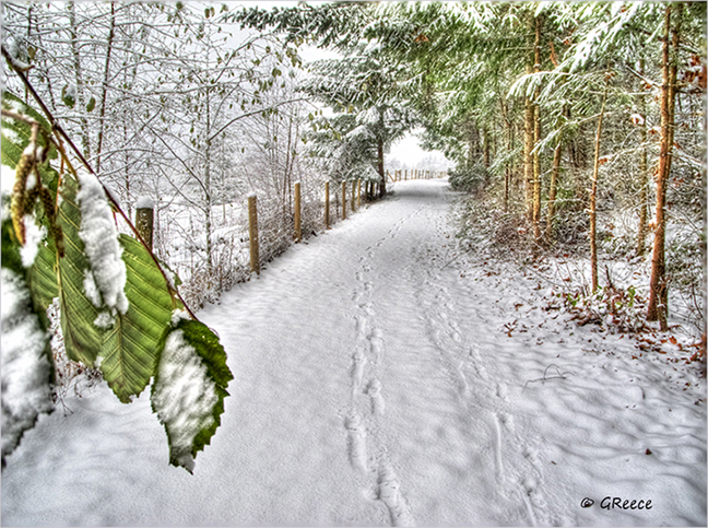 snowy country path
